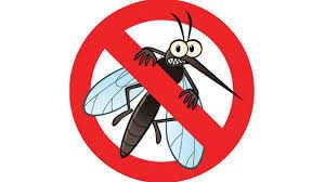 Những sự ththật thú vị về muỗi có thể bạn chưa biết.